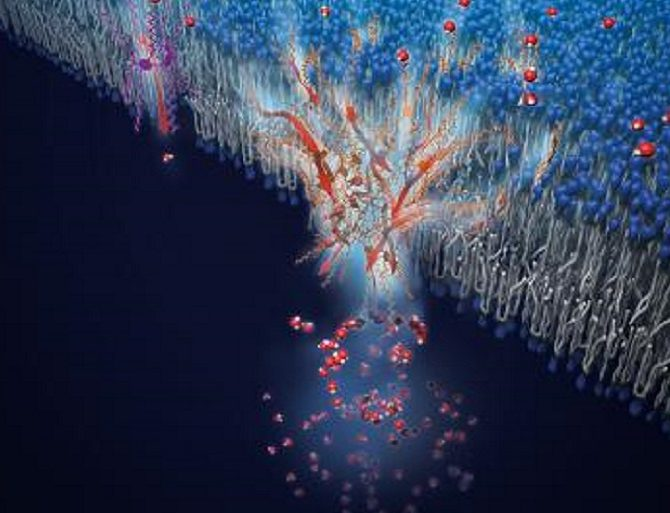 Les canaux d'eau artificiels permettent une perméation rapide et sélective de l'eau à travers des réseaux de fil d'eau