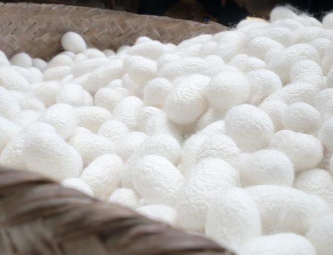 cocons de soie