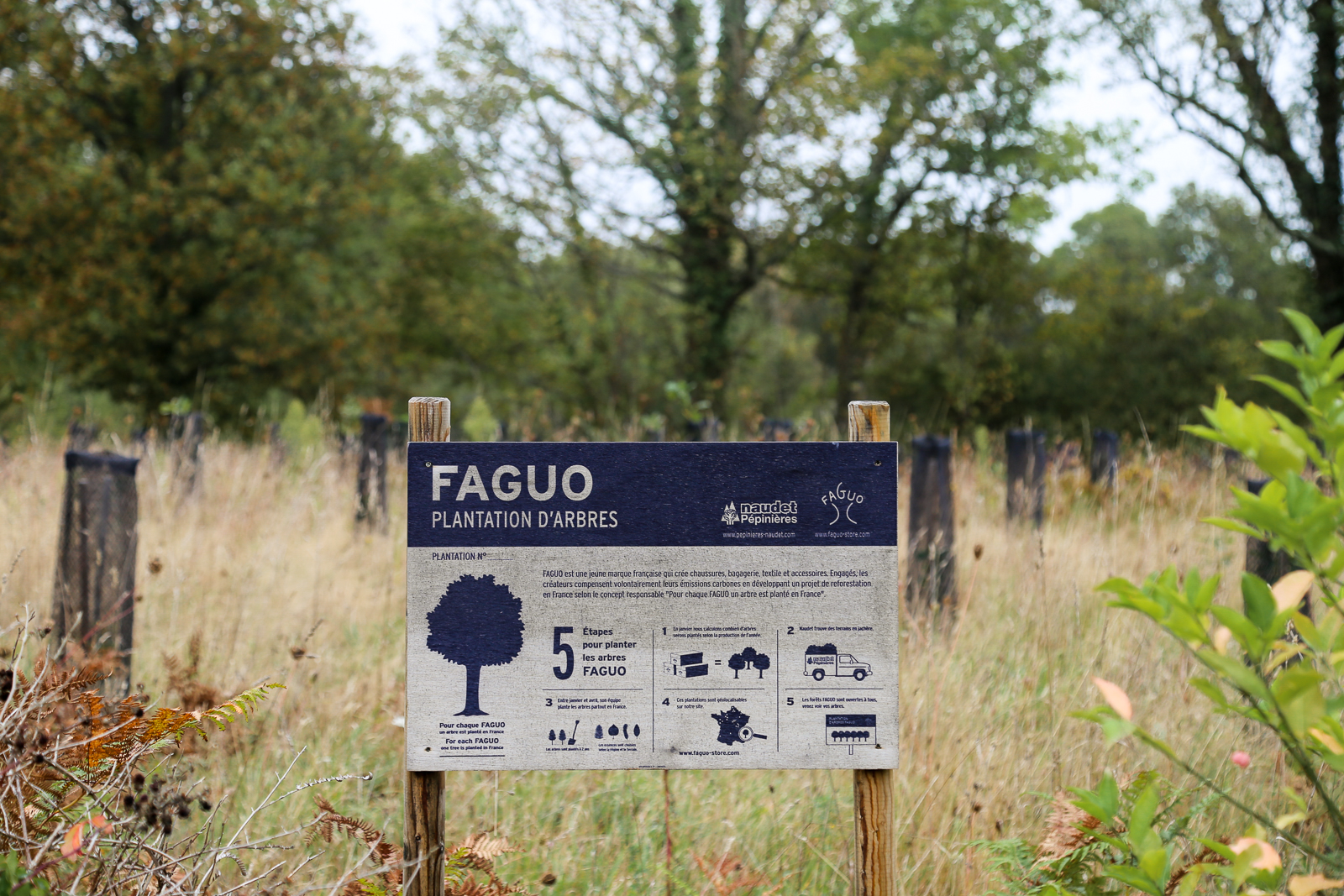 Forêts Fagup